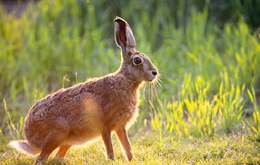 Arrêté préfectoral capture de lapins